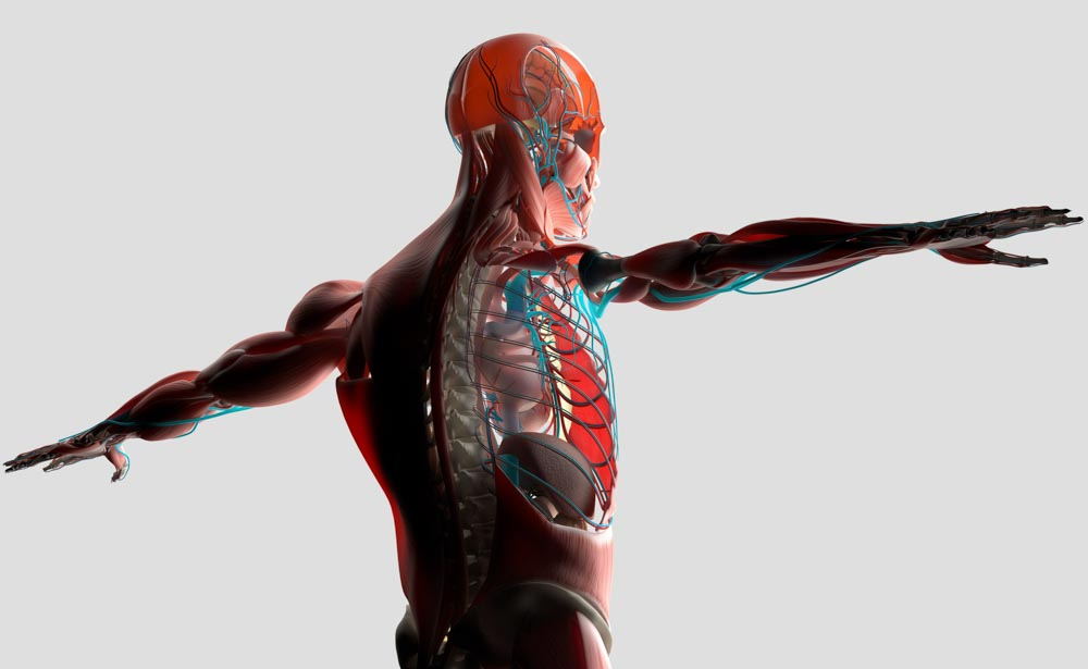 Spinal Cord Stimulation Stops Pain Signals | Integrated Pain Consultants